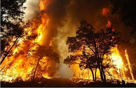 bush fire'